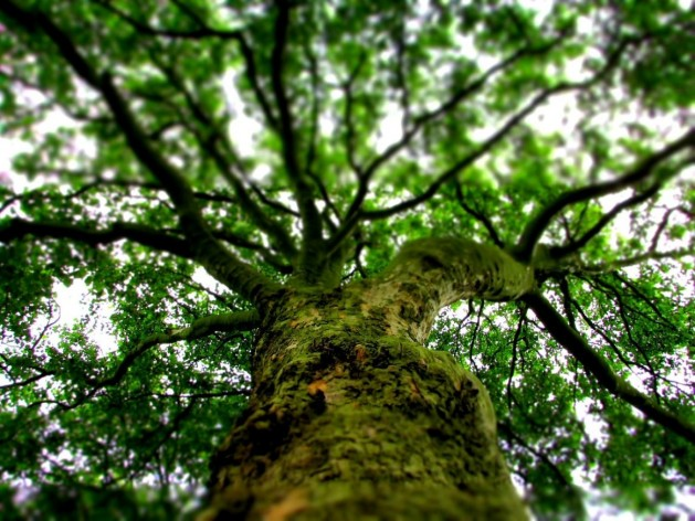 Baum-3_SNIPPING-143285_1280