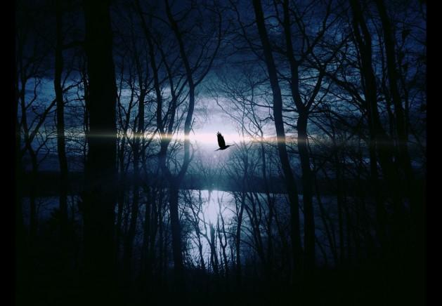 Vogel-Nacht_SNIP