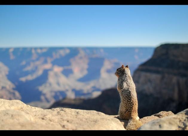 Squirrel_SNIP