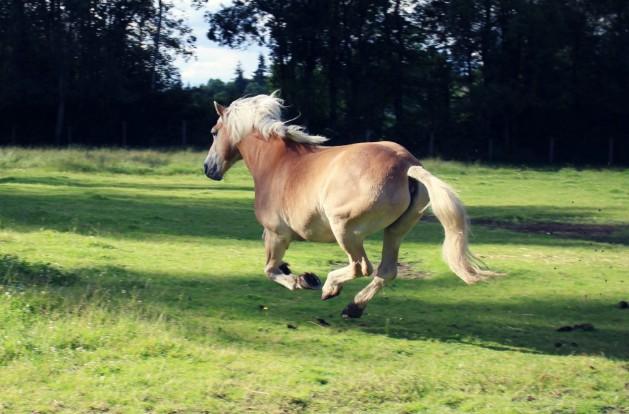 Pferd-weglaufen_SNIP_Farmgirlmiriam