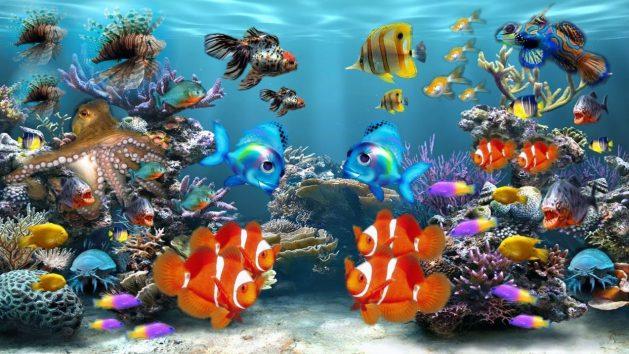 Fische-Aquarium-1-bunt_SNIP-284551_AzDude