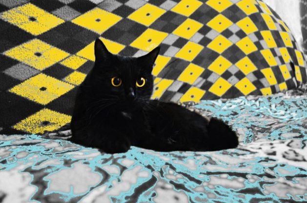 Katze-3f_SNIP_988138_Lissa_87