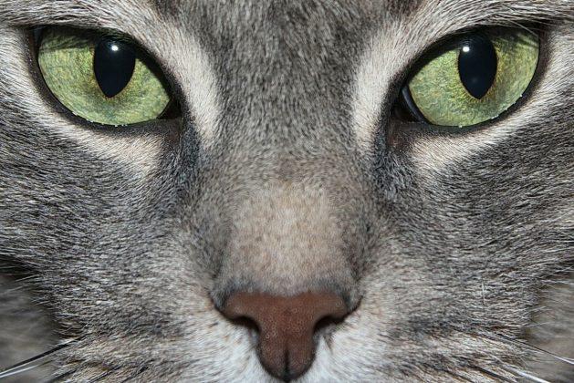 Katze-Fokus_SNIP_francapaschetta