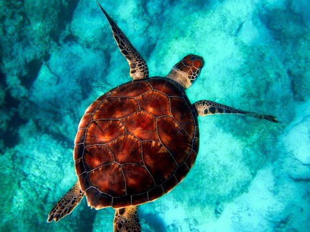 Schildkröte-Wasser_SNIP_tpsdave